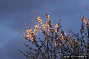 Fleurs-div-145-9