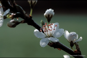 Fleurs-div-164