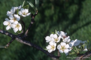 Fleurs-div-171