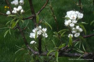 Fleurs-div-172