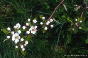 Fleurs-div-173