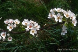 Fleurs-div-176