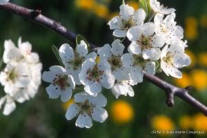 Fleurs-div-184