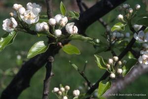 Fleurs-div-185