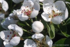 Fleurs-div-187
