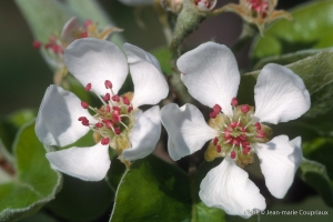 Fleurs-div-188