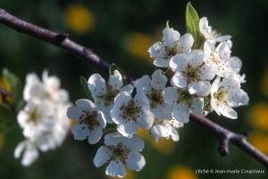 Fleurs-div-193