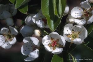 Fleurs-div-194