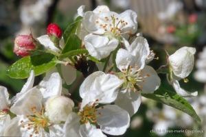 Fleurs-div-195