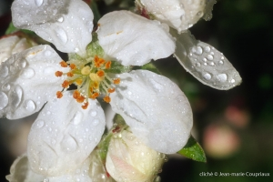 Fleurs-div-198