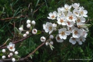 Fleurs-div-199