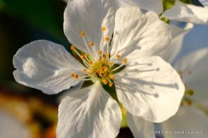 Fleurs-div-203