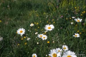 Fleurs-div-218