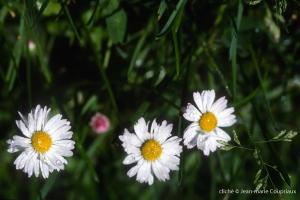 Fleurs-div-221