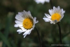 Fleurs-div-223