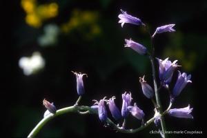 Fleurs-div-244-1