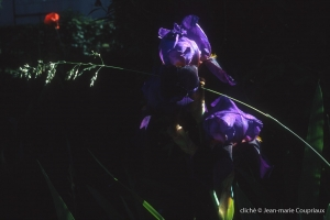 Fleurs-div-246-1