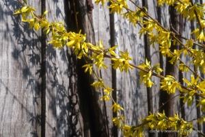 Fleurs-div-265-1-1