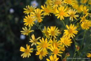 Fleurs-div-273
