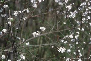Fleurs-div-303