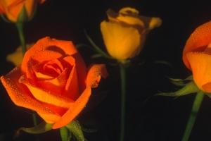 Fleurs-div-330