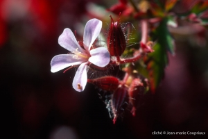 Fleurs-div-350