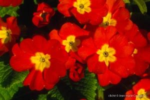 Fleurs-div-353