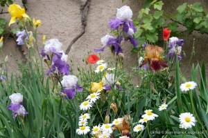 Fleurs_2009-5