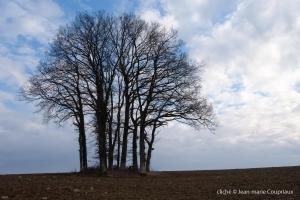 Nature-2010-2