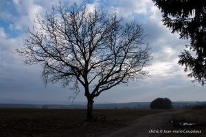 Nature-2010-3