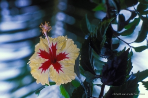 Guyanne_1996_Guyane-35