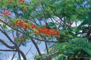 Guyanne_1996_Guyane-39