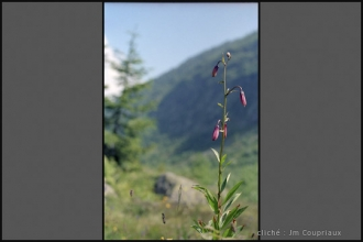 Alpes_1996-98
