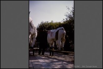 Amance_1960-CpeJoie-6.jpg