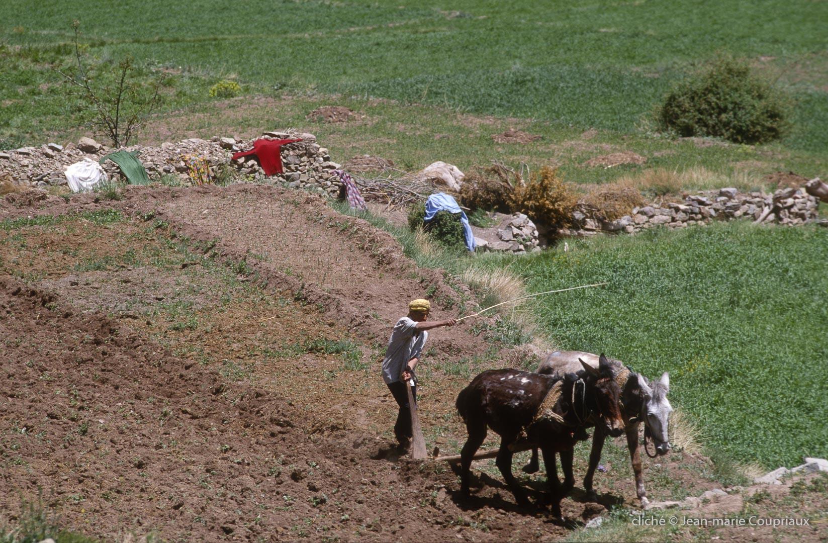 1996_4_Mgoun-Ouzirimt-399