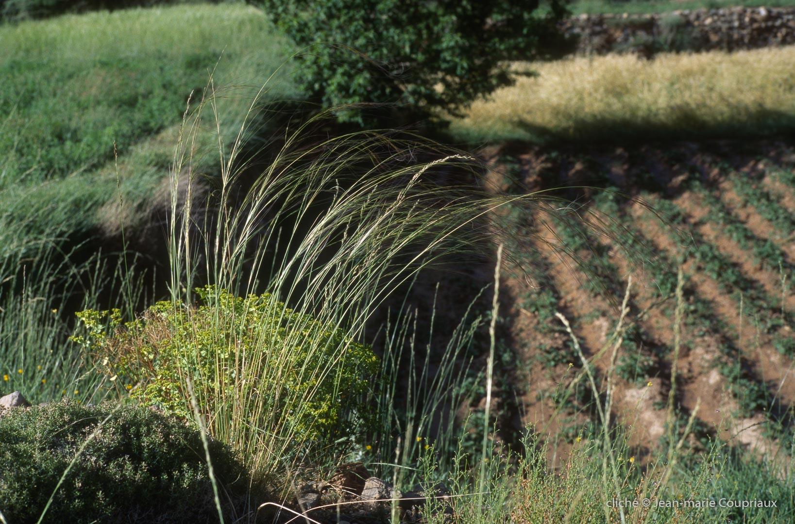 2003_Mgoun-336