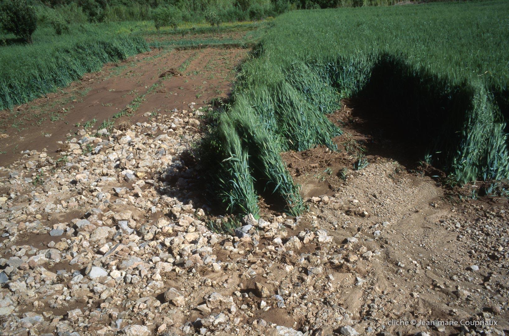 2003_Mgoun-374
