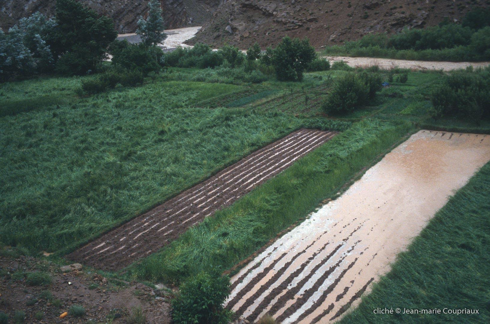 2003_Mgoun-395