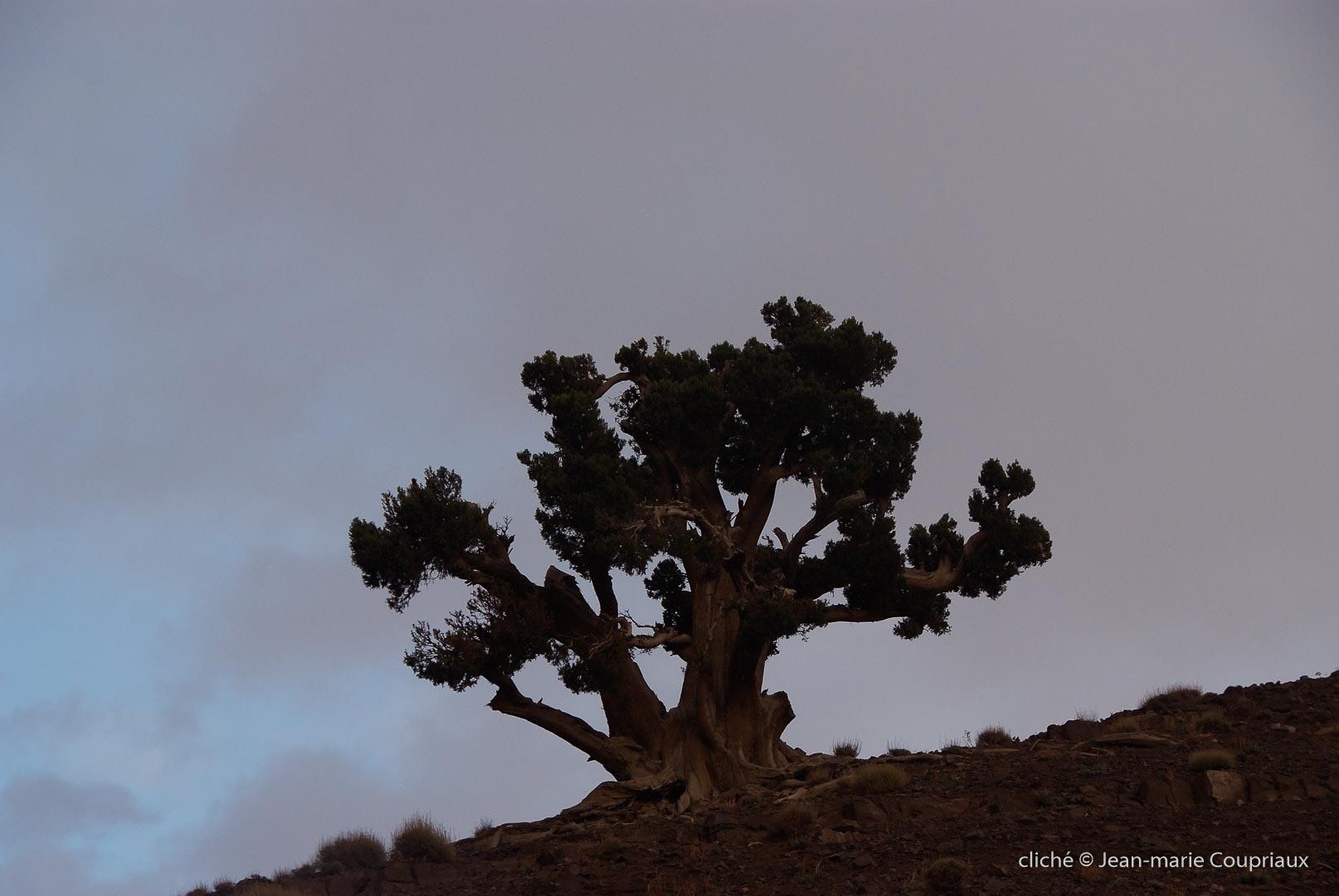 2008_Maroc-85