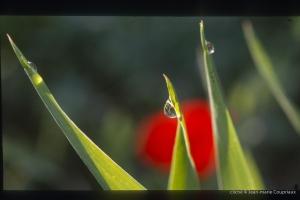 1997_Mgoun-Tabant-44
