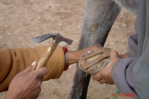 2006_Mgoun-sony-271