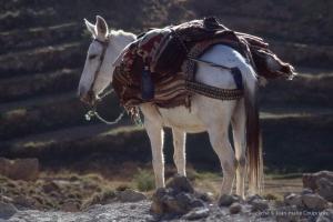 427-Maroc-1999-2001