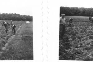 1961_agri-Menoux-1