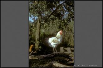 1974_Menoux-1-2.jpg