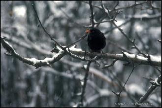 1986_Menoux_neige_6F.jpg