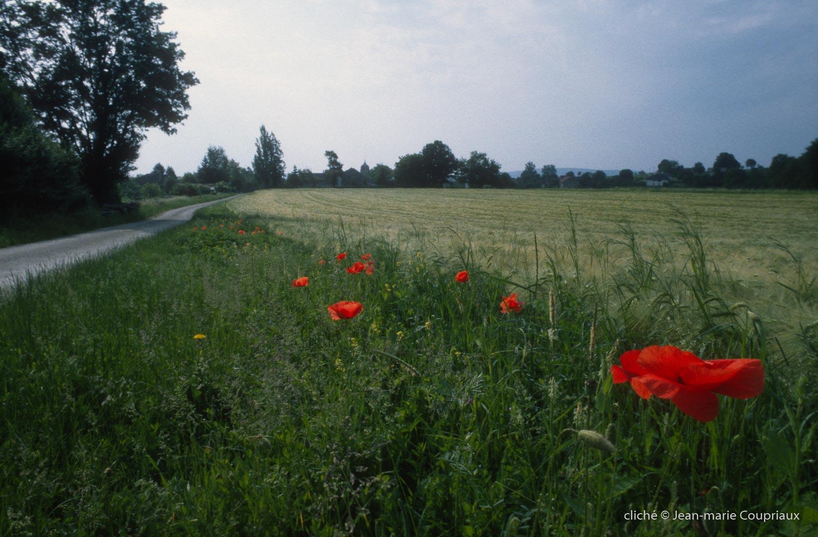 2000-Menoux-paysages-87