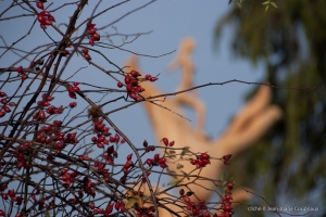 2012_Menoux_tilleul-235