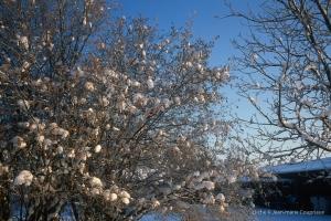 Menoux_hiver_103