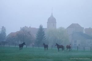 nature-matin-1998-116