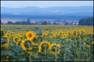 2000-Menoux-paysages-88.jpg